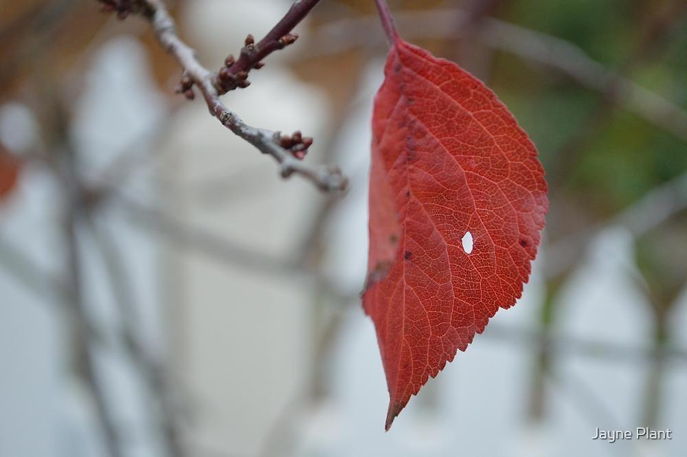 Leaf by Jayne Plant