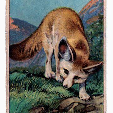 Fennec Fox by Romeyy