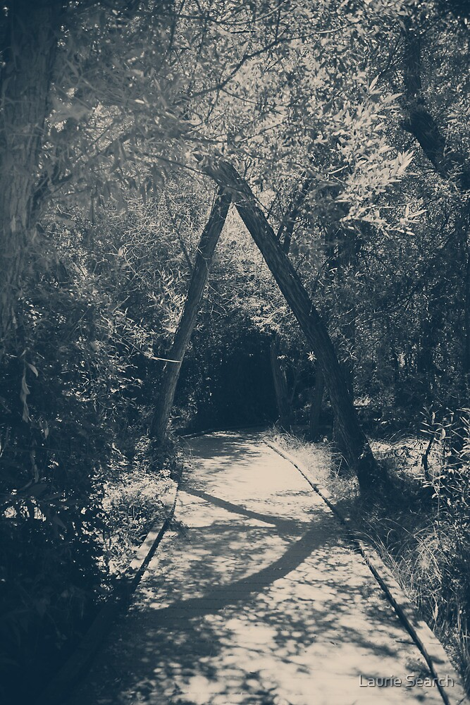 Our Paths Will Cross Again by Laurie Search