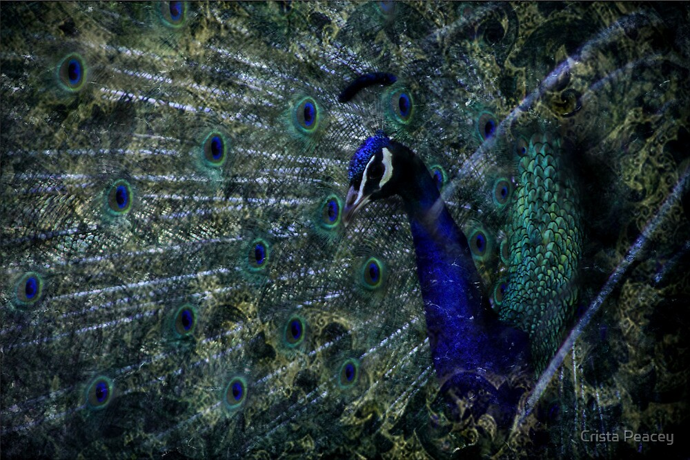 The Eye Of The Feather by Crista Peacey
