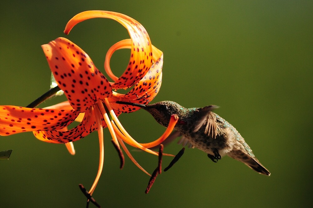 HUMMINGBIRD AND TIGER LILY by RoseMarie747