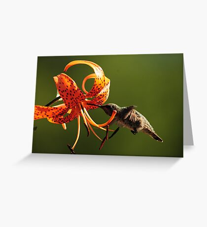 HUMMINGBIRD AND TIGER LILY Greeting Card