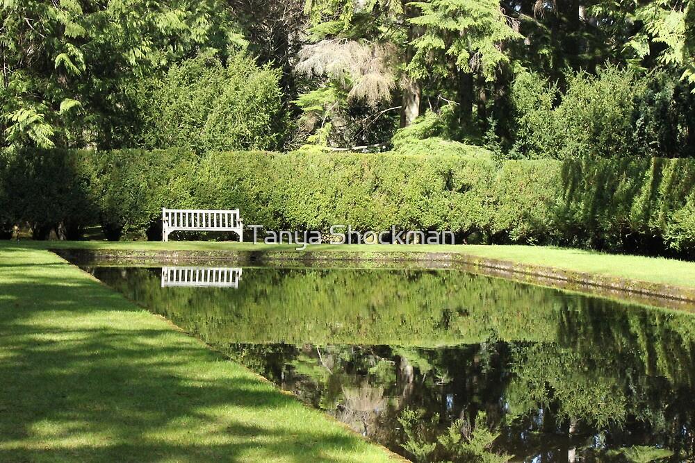 Reflection Pool by Tanya Shockman