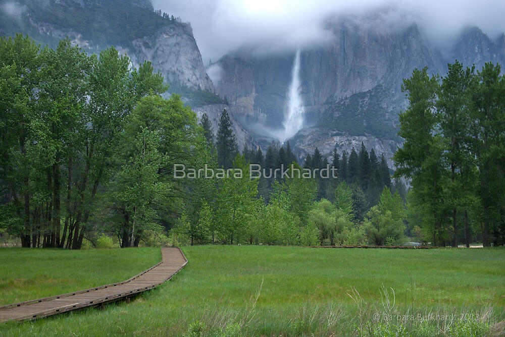 From a Green Meadow - Yosemite by Barbara Burkhardt