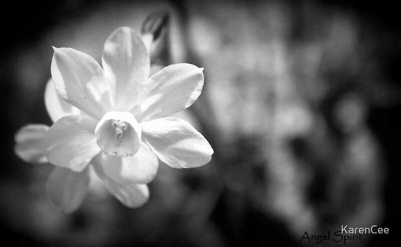 A Single Daffodil by KarenCee