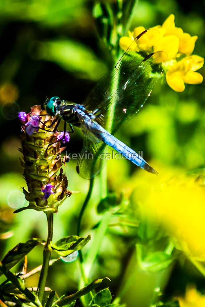 bdfly 2 by kevin  caldwell