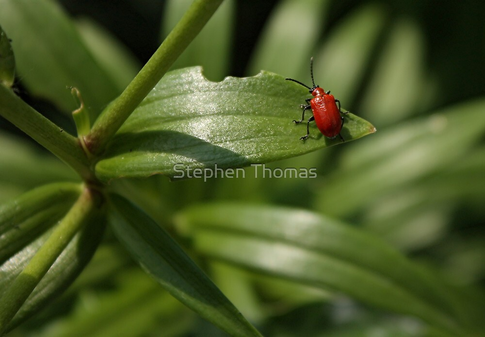 Standing Out On A Leaf by Stephen Thomas