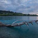 The Fallen _ Rakaia River NZ by Barbara Burkhardt