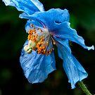 Blue Heaven by TeresaB