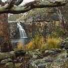 Turpins through the trees by Simon Penrose