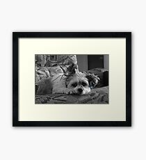 breed of her own Framed Print