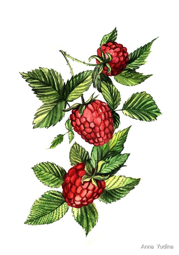 Raspberries by Anna  Yudina