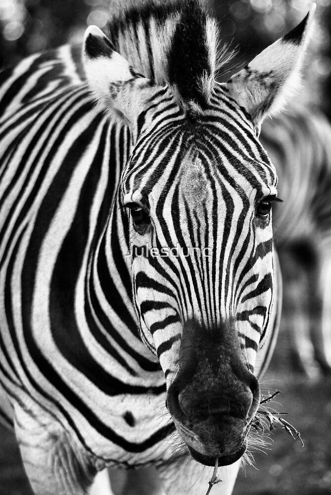 zebra - black and white by Julesdunc