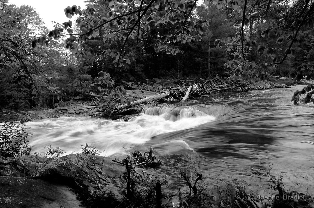 Spring Flow by Joanne  Bradley