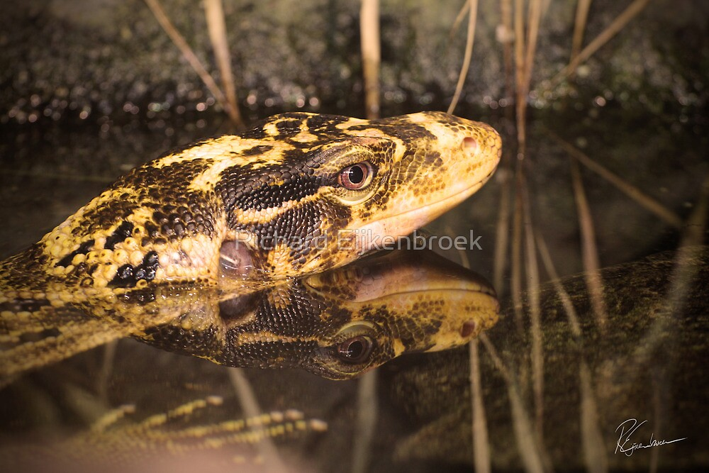Snake by Richard Eijkenbroek