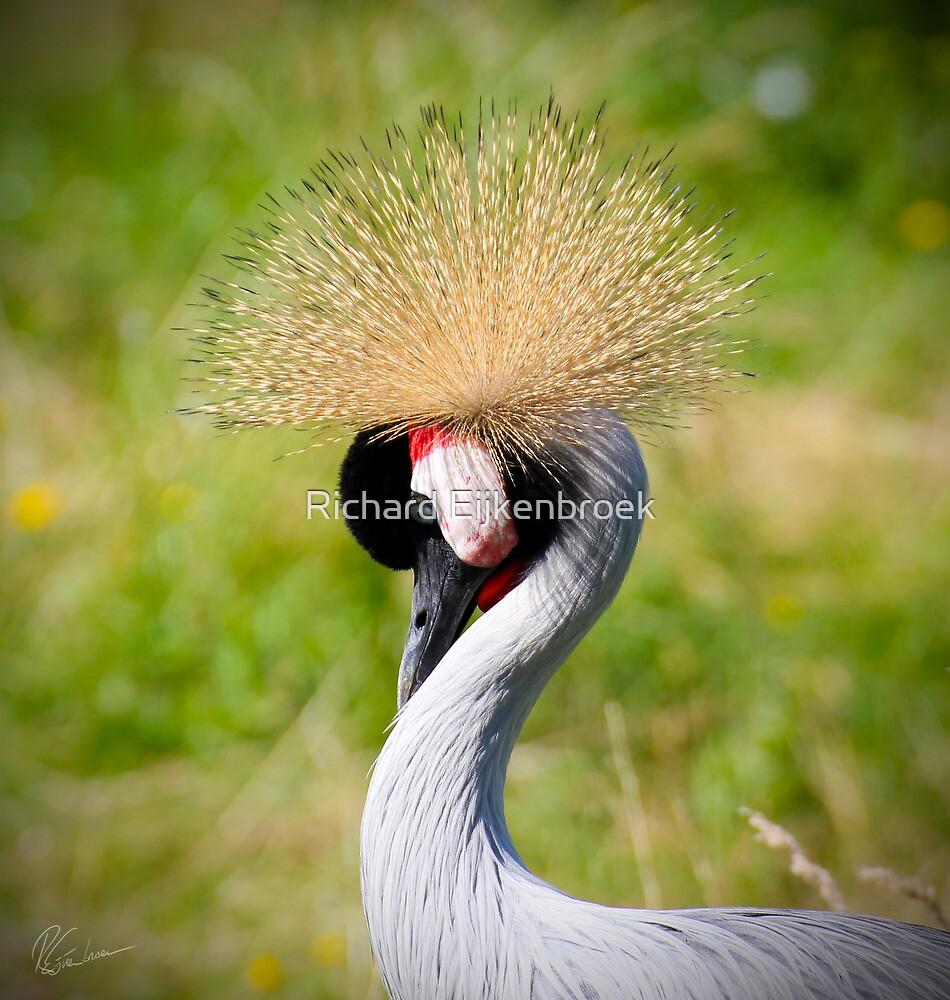 Crowned Crane bird by Richard Eijkenbroek