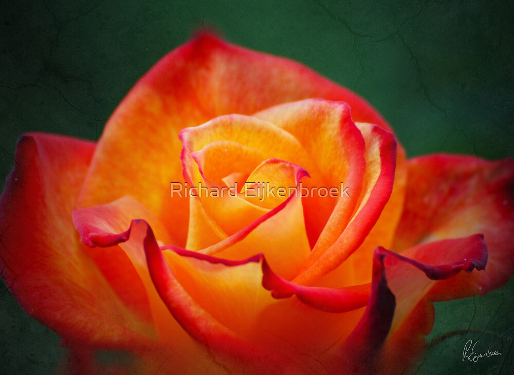 The heart of the Rose by Richard Eijkenbroek