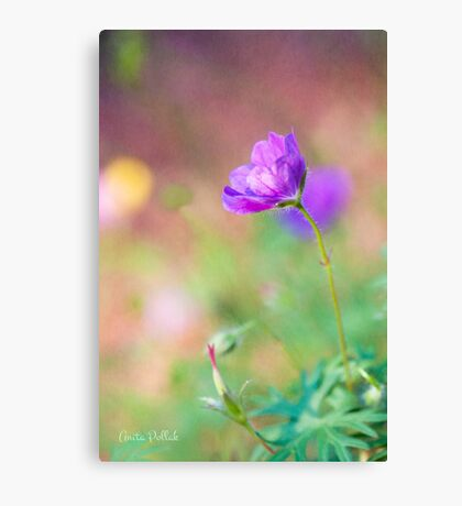 Proud Purple Cranesbill Canvas Print