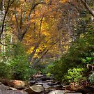 Smoky Mountain Color by Douglas  Stucky