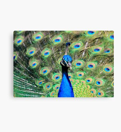 Colourscape Canvas Print