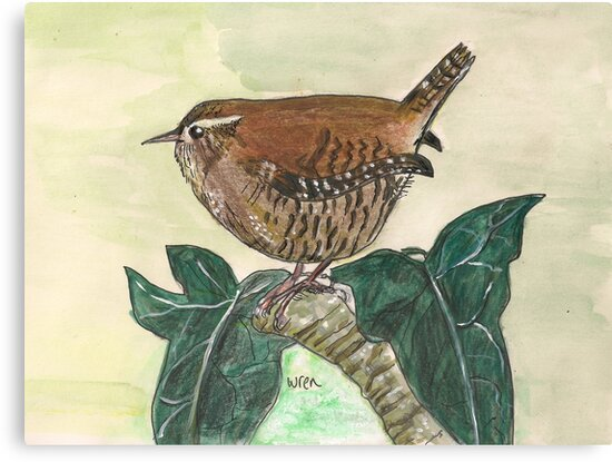 Wren on ivy leaves by Sam Burchell