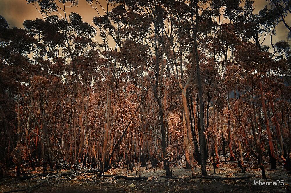 Destructive forest fires, Hermanus,SA by Johanna26