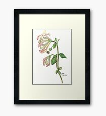 Honeysuckle Framed Print