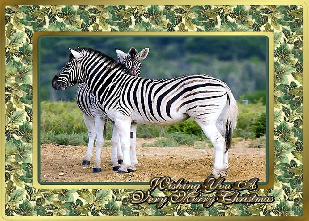 Zebra Blank Christmas Card by Oldetimemercan