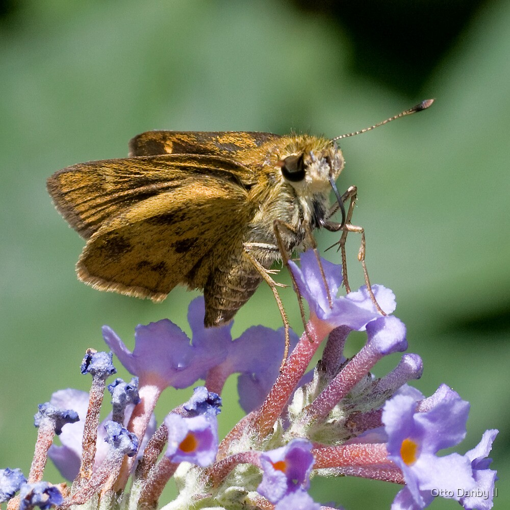Whirlabout Skipper by Otto Danby II