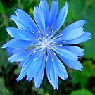 Blue Star by Shulie1