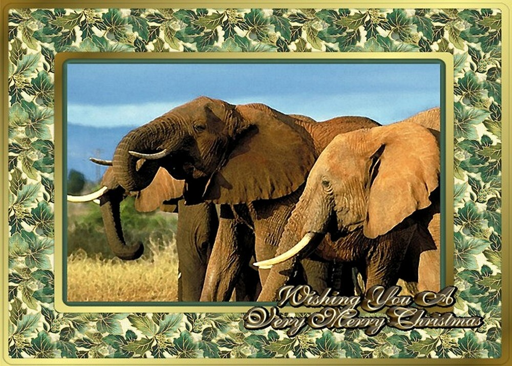 Elephant Blank Christmas Greeting Card by Oldetimemercan