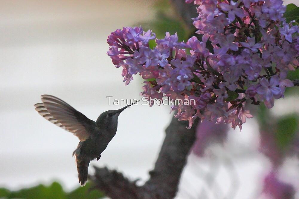 Hummingbird by Tanya Shockman