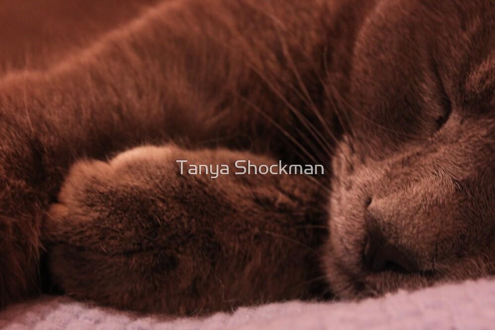 Kitty Slumber by Tanya Shockman