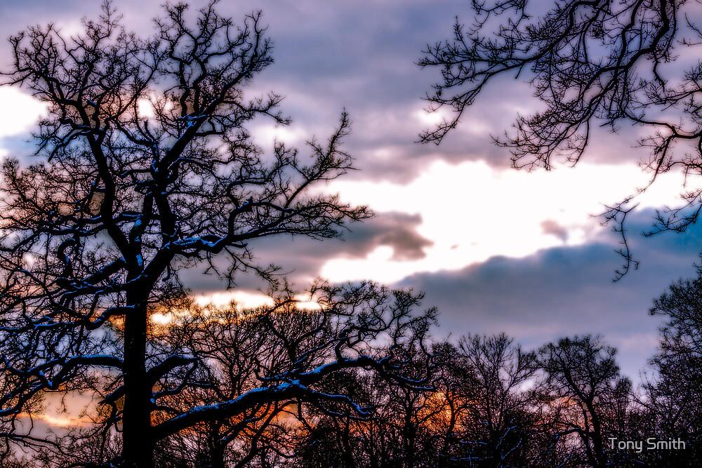 Winter sunset across the treetops by Tony Smith