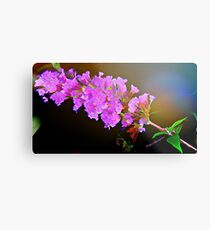 Attracting Blossom Metal Print