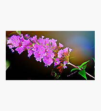 Attracting Blossom Photographic Print