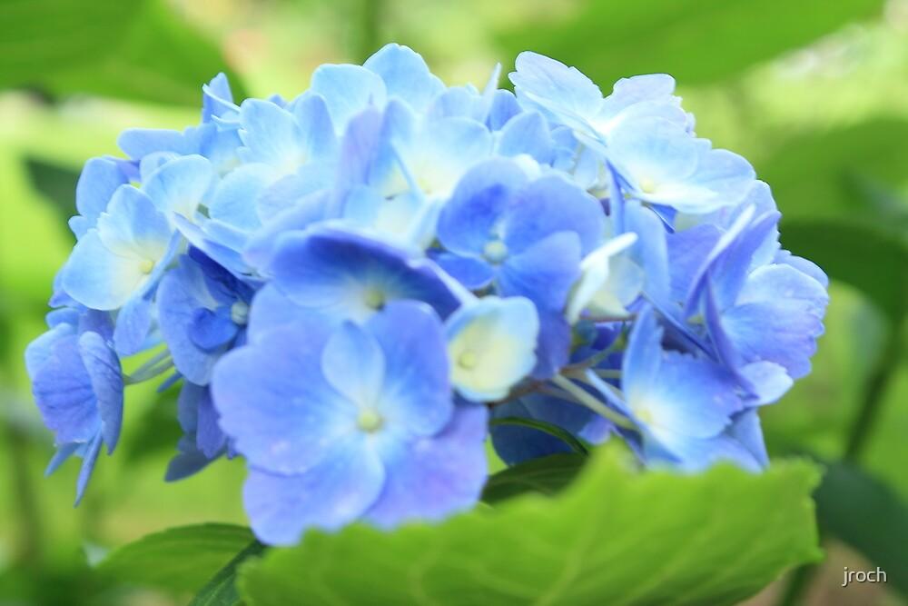 Ol' Blue by jroch