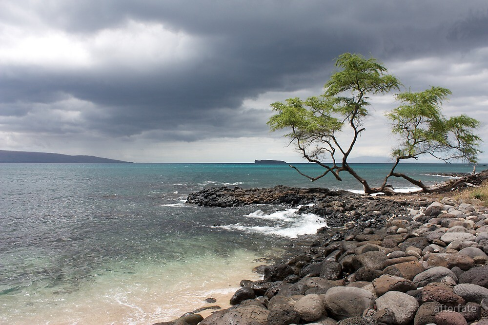 Divided Tree along the rocky shore by Chris Sauerwald