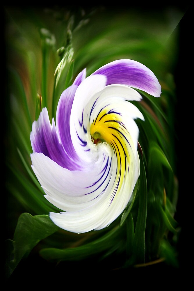 Pansy with a Twist by Karen Harrison