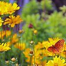 Butterfly in yellow by kutekatgurl