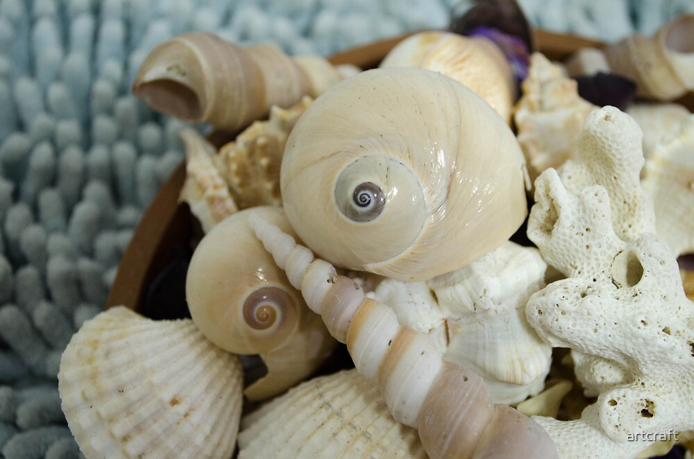 A Plate of Shells ! by artcraft