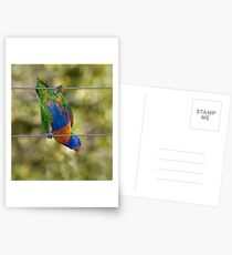 Bird on a wire Postcards