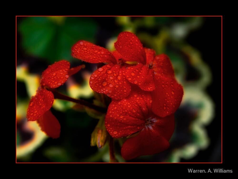 Rain Drops on Red by Warren. A. Williams