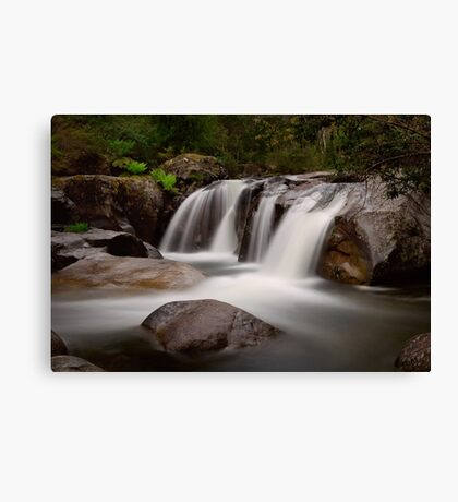 Pure of Soul Canvas Print