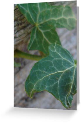 Ivy Leaves by Jayne Plant