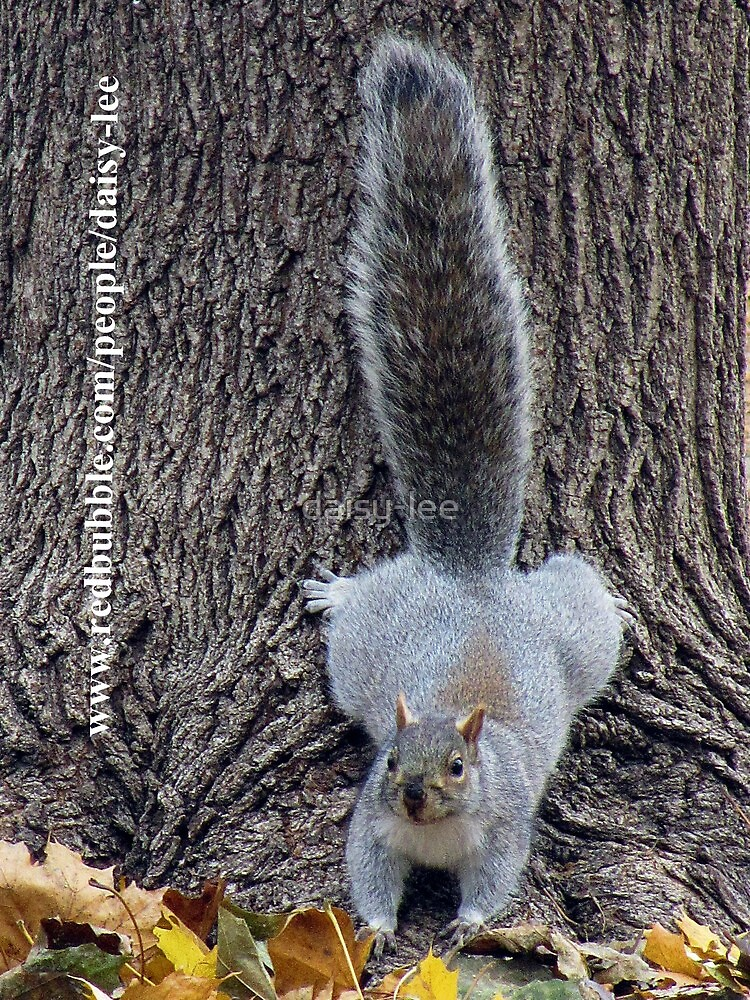 Squirrel Montreal 1 by daisy-lee