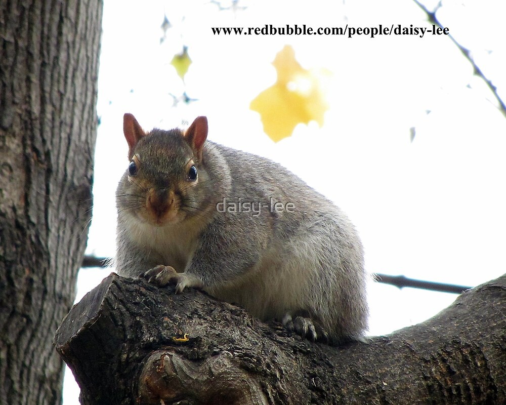 Squirrel Montreal 2 by daisy-lee