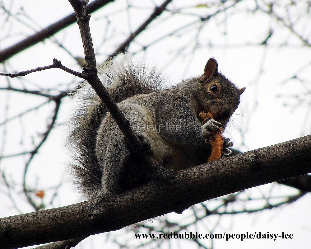 Squirrel Montreal 3 by daisy-lee