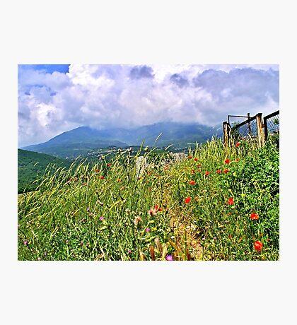 Crimea's Wildflowers Photographic Print