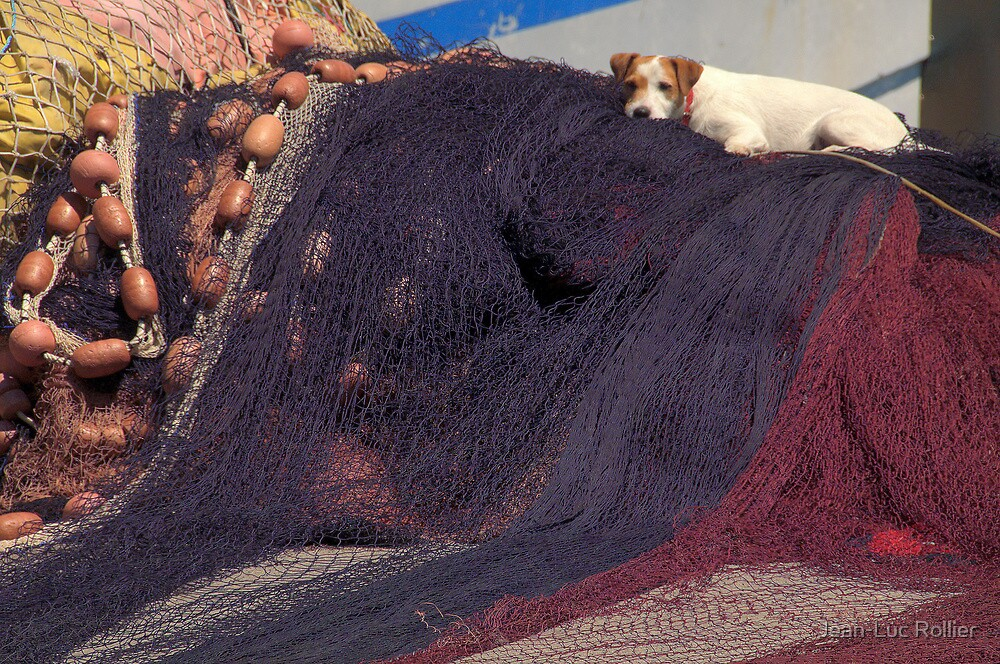 Le chien et les filets. by Jean-Luc Rollier